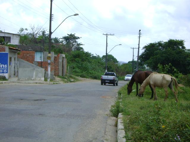 Avenida Roberto Santos: animais oferecem riscos a motoristas.